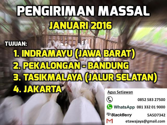 pengiriman-massal-january-2015