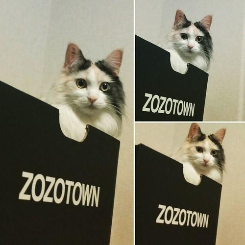 #zozotown が好きすぎてずっと入ってる。