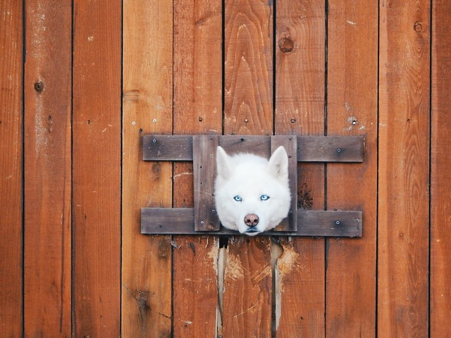Animals-Micah Dechavez-Don't get your head out of the gutter...get it out of the fence!