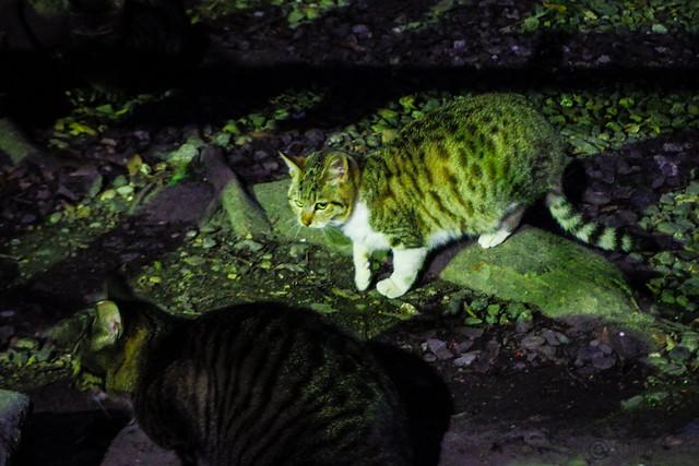 Today's Cat@2016-02-08