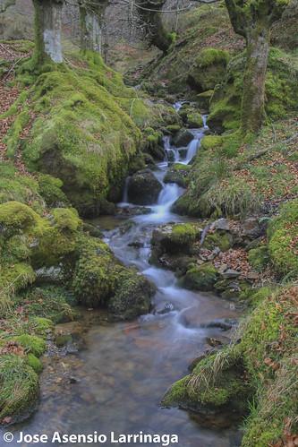 Parque Natural de Gorbeia #DePaseoConLarri #Flickr -2585