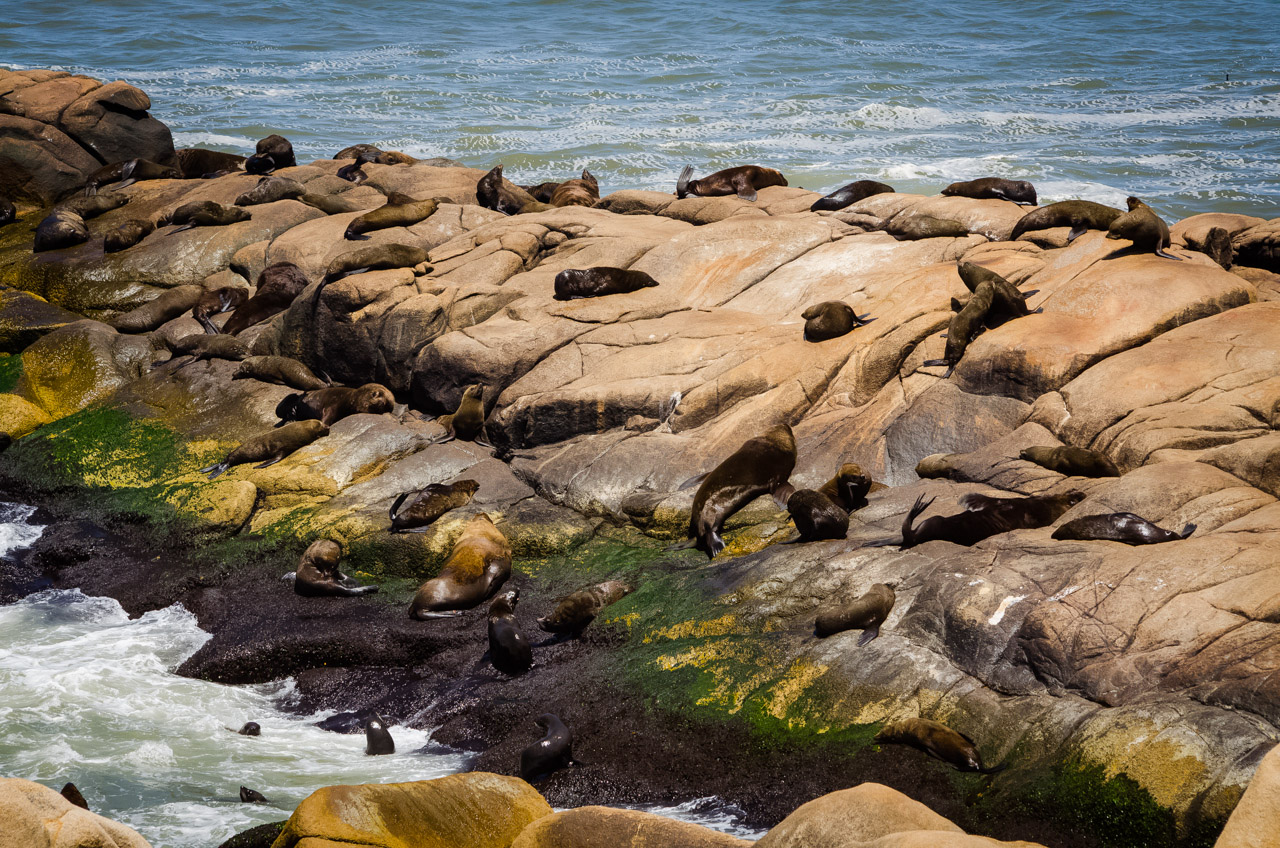 Lobos marinos se dan un baño de sol en la orilla rocosa de Cabo Polonio, en una localidad protegida por el municipio llamado Lobería. (Elton Núñez)