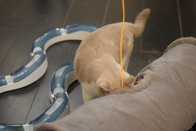 Time Flies When You're Having Fun   Cat in the Window Café