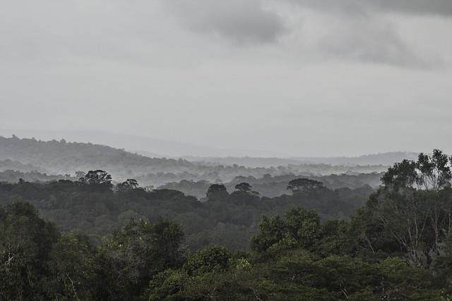 Vue sur la forêt Amazonienne depuis la savane roche Virginie
