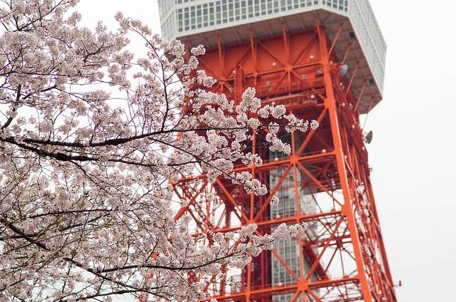 2016年4月2日お花見-19