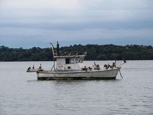 Lívingston: le bateau aux pélicans
