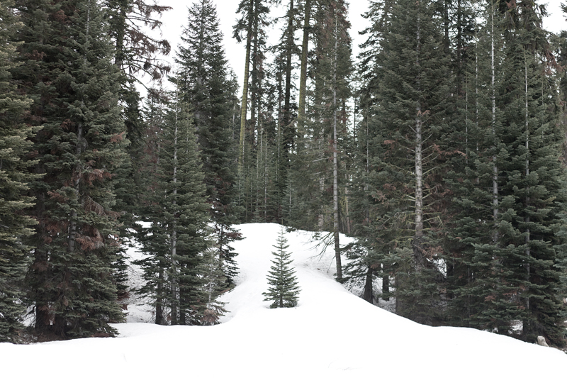 08yosemite-snow-skiing-badgerpass-trees-travel