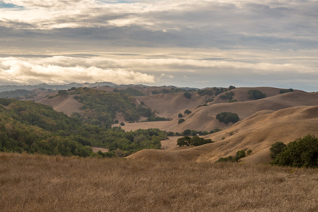 Briones Regional Park, Contra Costa County, California, USA
