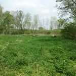Wetland sedges, facing east