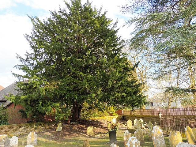 Tree in the Cemetery