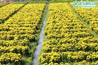 Tour Miền Tây 4 Ngày 3 Đêm - vườn hoa