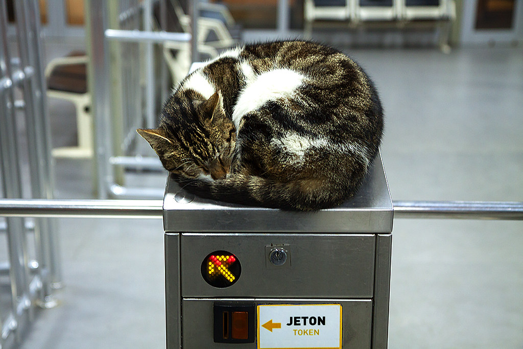 Cat sleeping on ferry turnstile--Burgazada