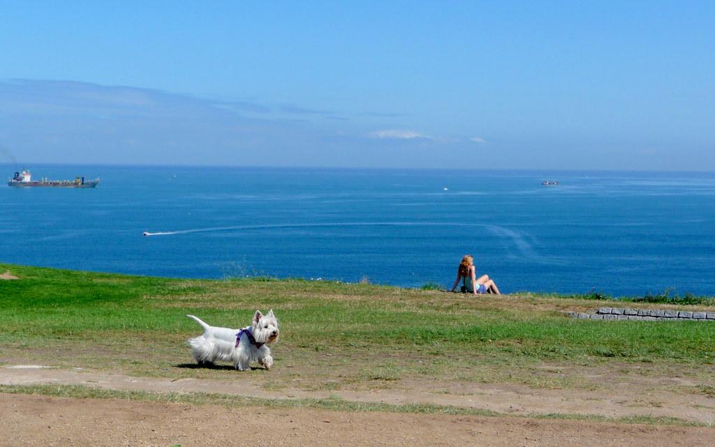 contemplativa y un can