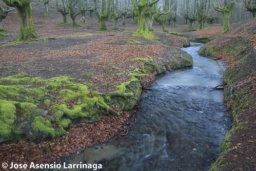 Parque Natural de Gorbeia  #DePaseoConLarri #Flickr -3051