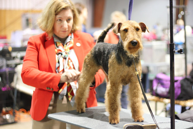 Mount Cheam Canine Association 2016 Show