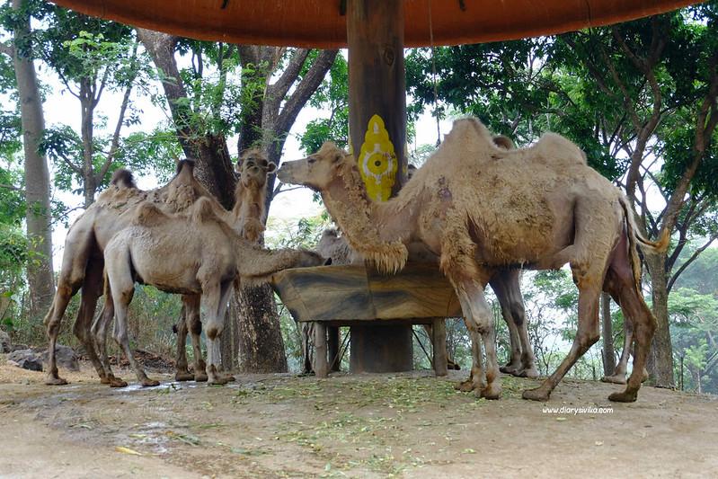 taman safari prigen 4