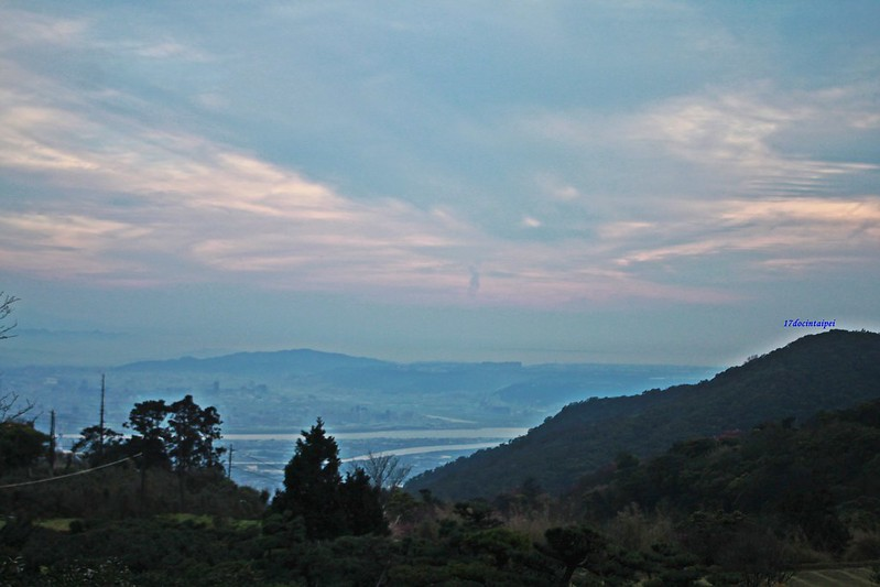 竹子湖採海芋-17度C隨拍 (96)