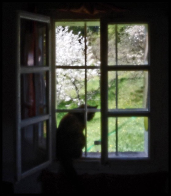 OUR CAT LEMUR IN THE WINDOW