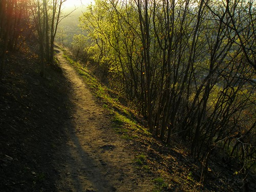 Spring Trail