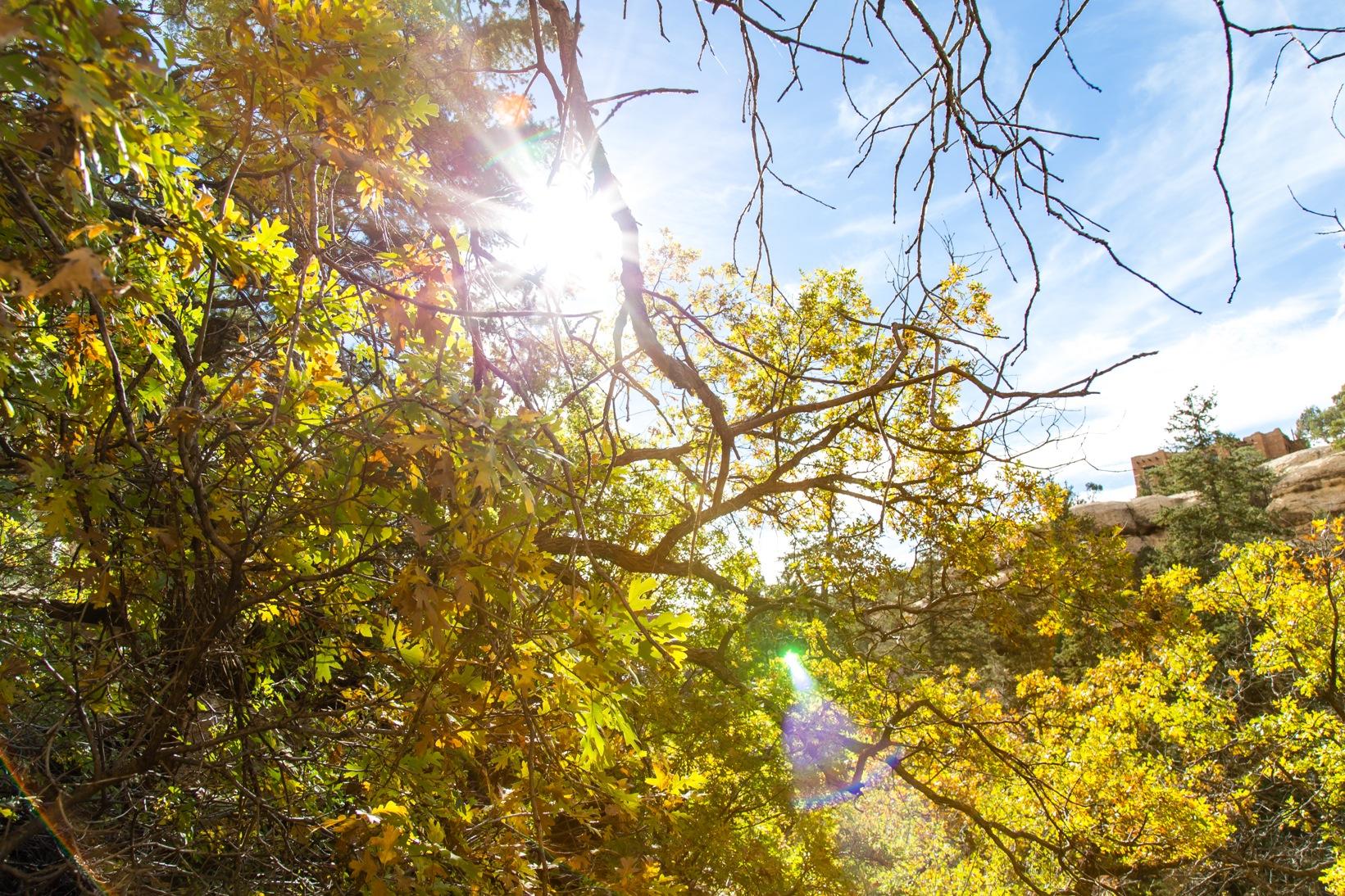 Mesa Verde-7163