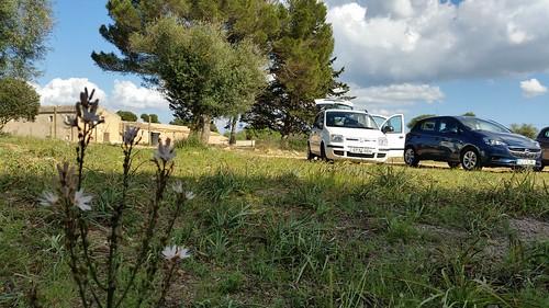 26471833612 6d82ffc434 Tag 6, Cuevas del Drach