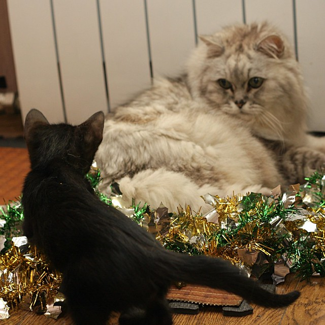 My cats)