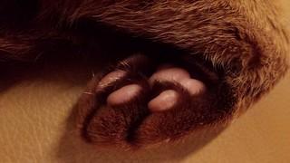 Sahara toes