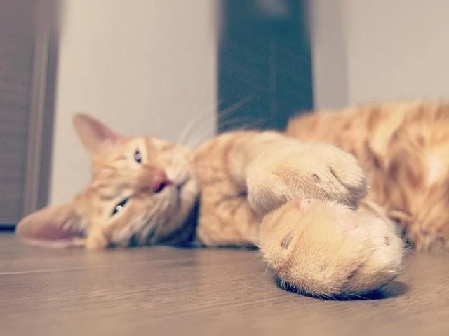 うっとり〜😴😴😴 #cat #cats #catsofinstagram #catstagram #instacat #instagramcats #neko #nekostagram #猫 #ねこ #ネコ# #ネコ部 #猫部 #ぬこ #にゃんこ #ふわもこ部
