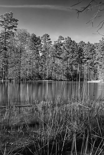 statepark park trees lake water forest reflections jones us pond texas unitedstates middlelake conroe stateforest middlepone wgjones williamgoodrichjones