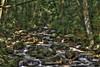 Jones Gap Middle Saluda River