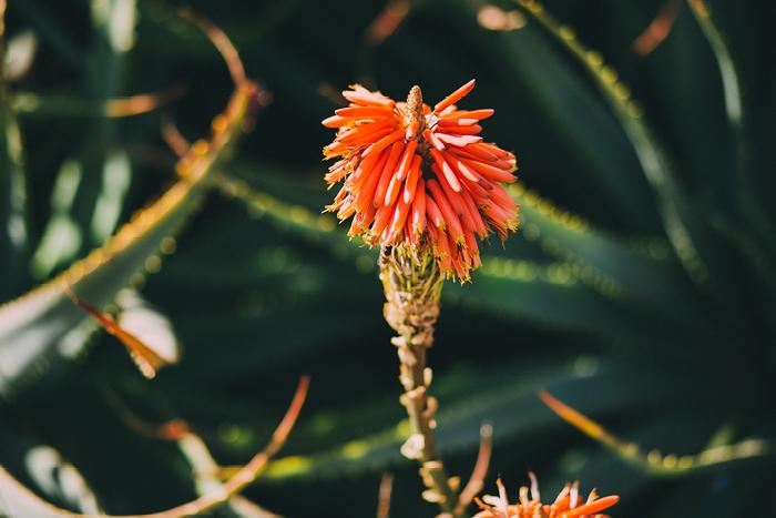 san_botanic12