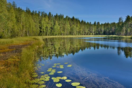 lake reflection nature water forest finland landscape pond scenery view outdoor serene lilypad kangasniemi