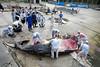 Humpback Whale Autopsy