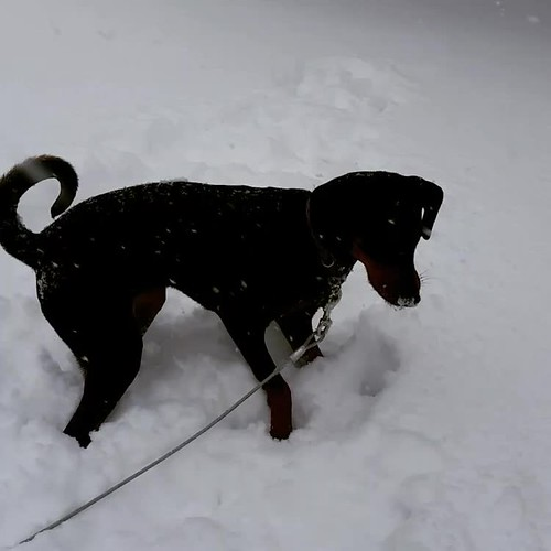 Penny Playing in the Snow