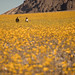 Yellow Field by The Byrne Files
