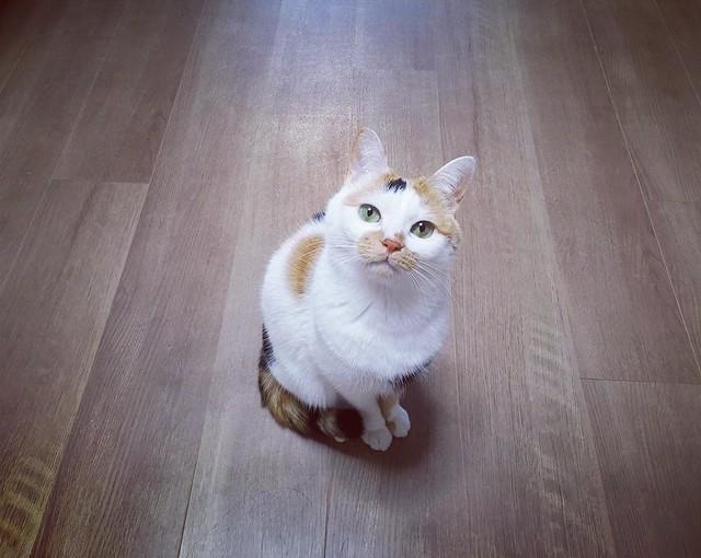 カメラ目線いただきました😸 #cat #cats #catsofinstagram #catstagram #instacat #instagramcats #neko #nekostagram #猫 #ねこ #ネコ# #ネコ部 #猫部 #ぬこ #にゃんこ #フワモコ部