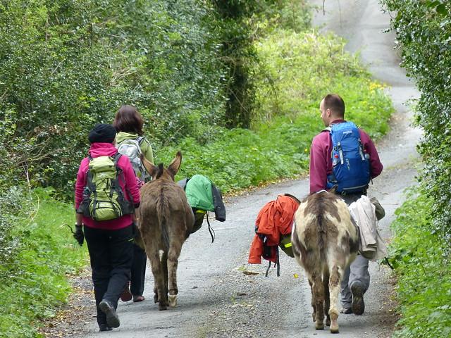 2013 Irland - Eselwandern