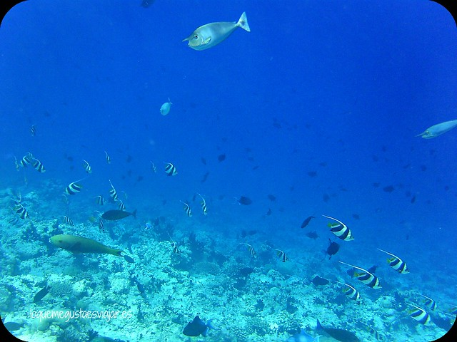 Maldivas13