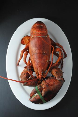 lobster tacos (4)