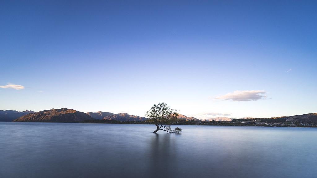 Lone tree 孤獨的樹