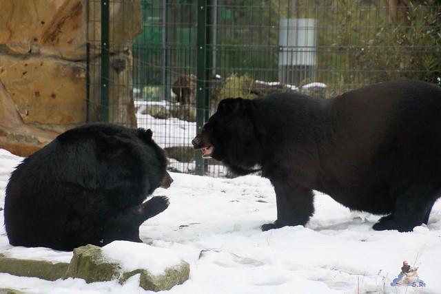 Zoo Berlin 08.01.2015  011