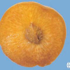 peaches-0042