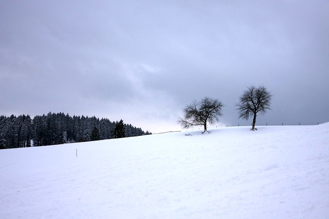 Snow in the Black Forest IV