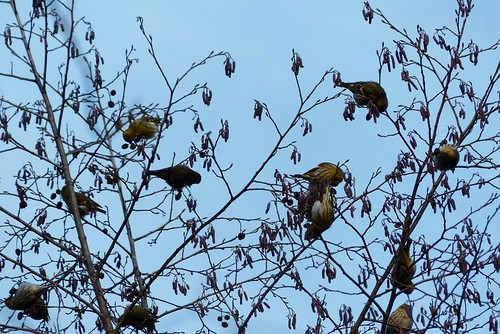 Wow! Tweetie invasion! :)