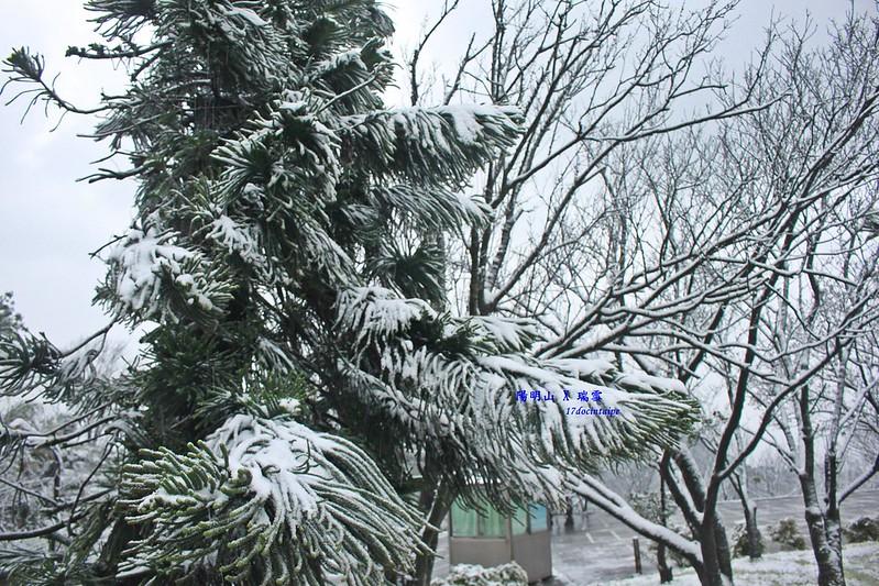 2016-台北陽明山-瑞雪-難得一見的雪白山景-17度C隨拍 (33)
