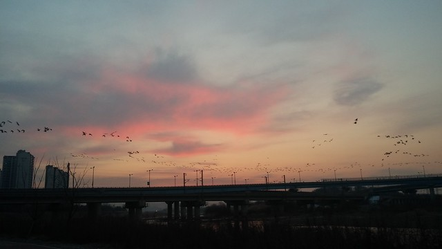 공릉천 관찰일기 -봄기운 완연한 아침산책길
