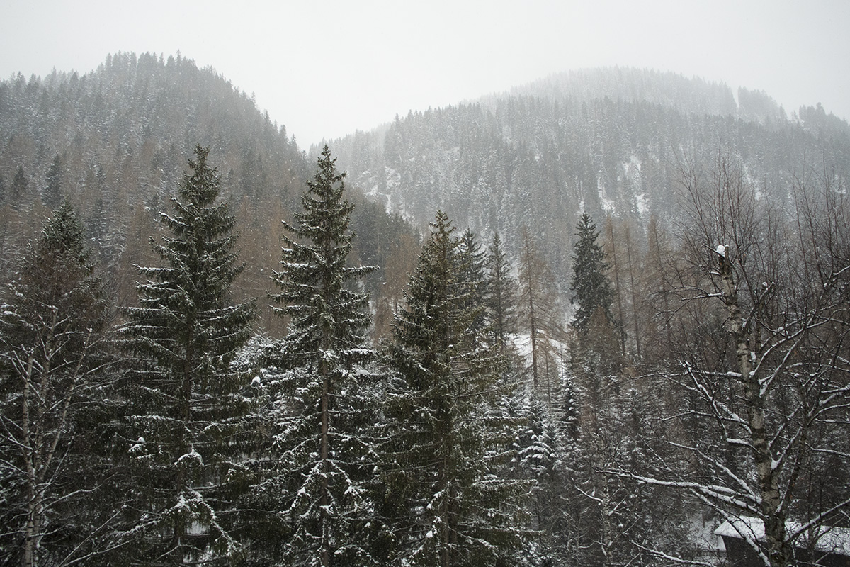 trees-forest-mountains-st-anton-alps