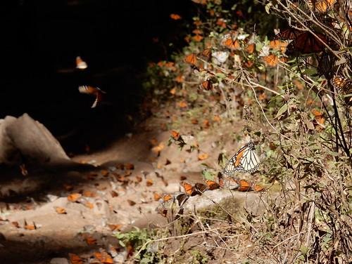 Reserva Mariposa Monarca - 6