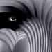 eye see you by Bluesrose
