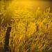 Sunlit Fence - Explore 26/02/2016 by paulapics2